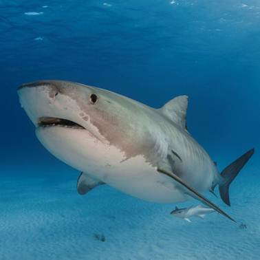 The Global Shark Movement Project